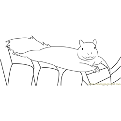 Wild Squirrels Lounge Free Coloring Page for Kids