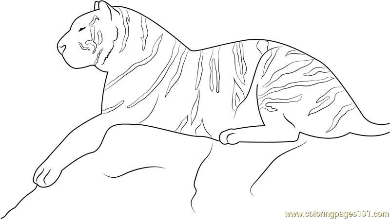 Royal Bengal Tiger Coloring Page Free Tiger Coloring Pages