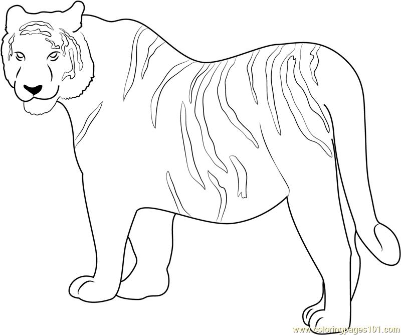 siberian tiger coloring page - siberian tiger coloring page free tiger coloring pages
