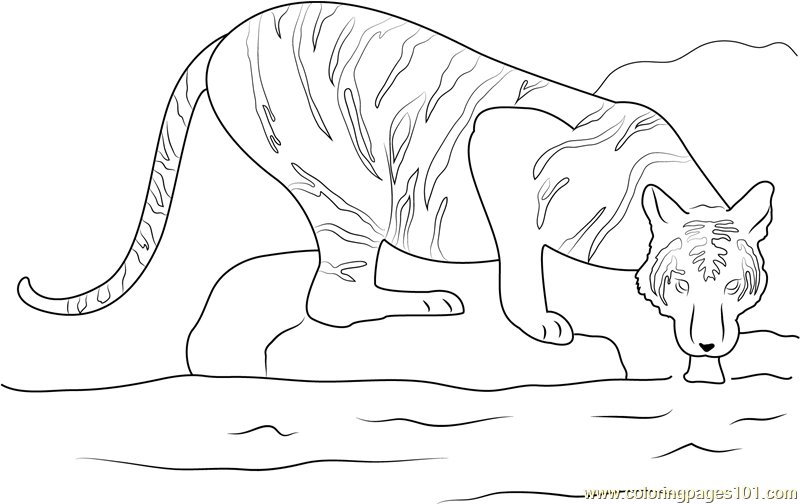 Tiger in a Water Coloring Page