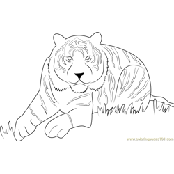 Eye of the Tiger Free Coloring Page for Kids