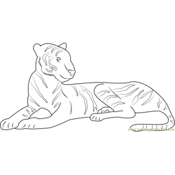 Malnourished Tiger Free Coloring Page for Kids