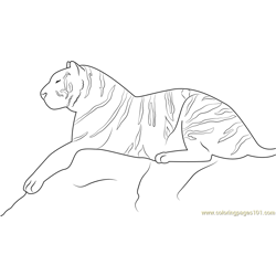 Royal Bengal Tiger Free Coloring Page for Kids