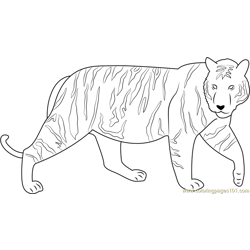 Runway Tiger Free Coloring Page for Kids