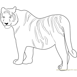 Siberian Tiger Free Coloring Page for Kids