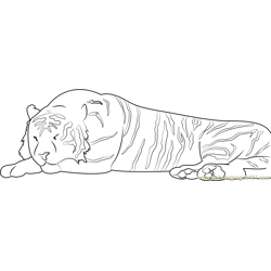 Sleeping Tiger Free Coloring Page for Kids