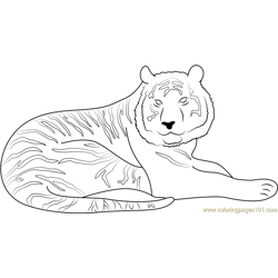 Tiger Look at Me Free Coloring Page for Kids