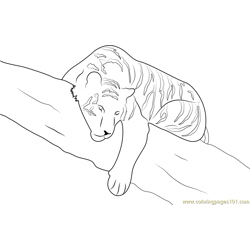 Tiger Sleeping on Tree Free Coloring Page for Kids
