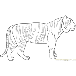 Tiger Up Look Free Coloring Page for Kids
