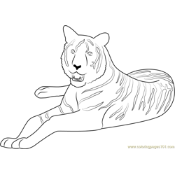 Tiger at Look Free Coloring Page for Kids
