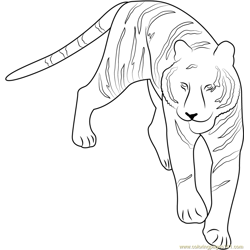 Tiger at See Free Coloring Page for Kids