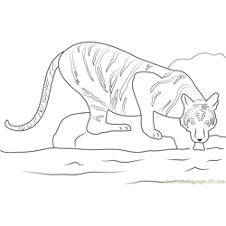 Tiger in a Water Free Coloring Page for Kids
