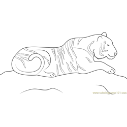 Tiger on Hunting Free Coloring Page for Kids
