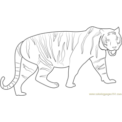 Walking Tiger Free Coloring Page for Kids