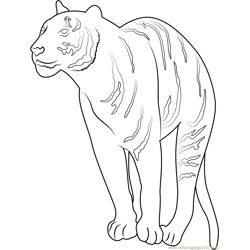 Wild Tiger Free Coloring Page for Kids