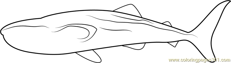 Black Patch Whale Coloring Page