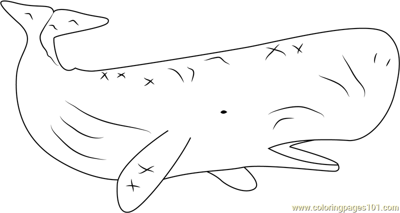 Sperm Whale Coloring Page Free