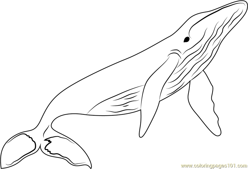 Whales Coloring Page Free Whale Coloring Pages