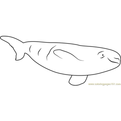 Beluga Whale Relaxing Free Coloring Page for Kids