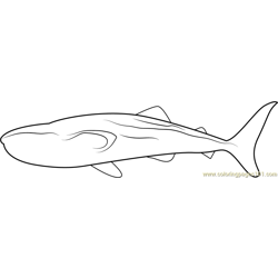 Black Patch Whale Free Coloring Page for Kids