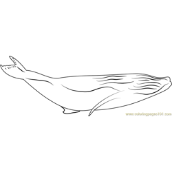 Haapai Humpback Whale Breach Free Coloring Page for Kids