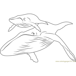 Humpback Whale Free Coloring Page for Kids