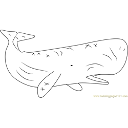 Sperm Whale Free Coloring Page for Kids