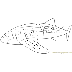 Whale Shark Free Coloring Page for Kids