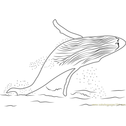 Whale Watch Free Coloring Page for Kids