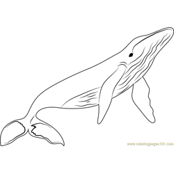 Whales Free Coloring Page for Kids