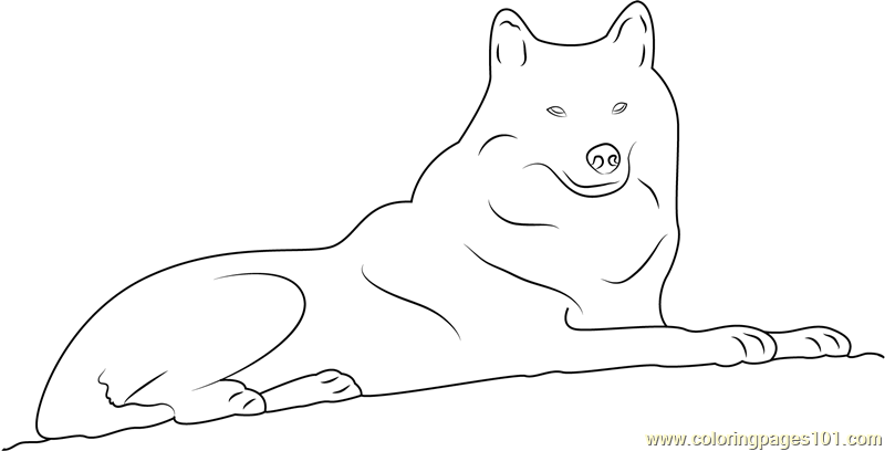 Arctic Wolf Coloring Page Free Wolf Coloring Pages