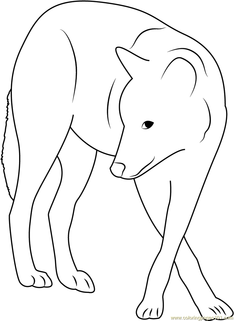 gray wolf coloring pages - photo#28