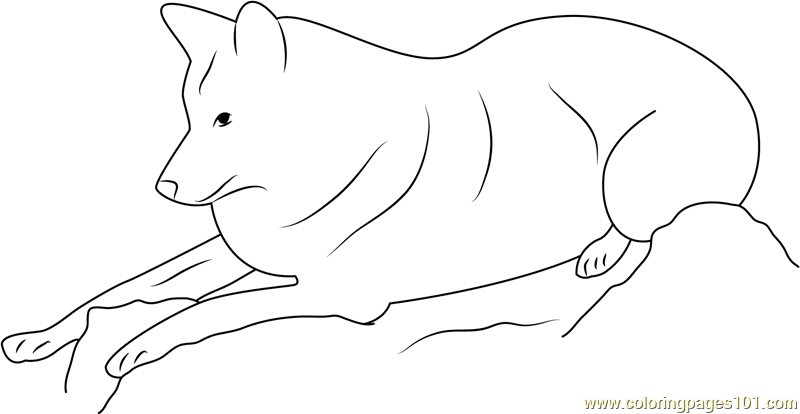 Charming Himalayan Wolf Relaxing Coloring Page