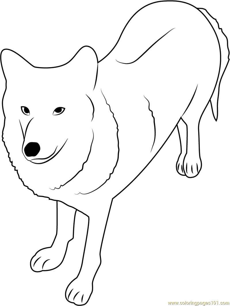 Exceptional Himalayan Wolf Coloring Page
