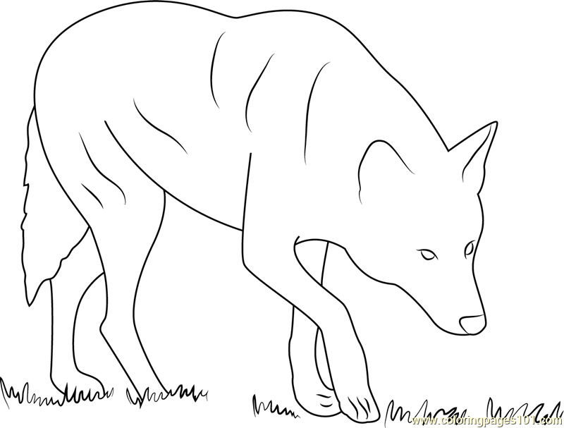 Red Wolf Albany Chehaw Coloring Page