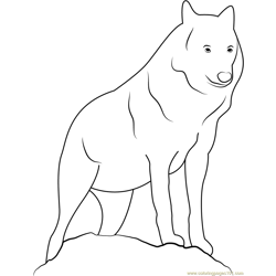 Canis Lupus Lupus Free Coloring Page for Kids