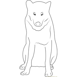 Gray Wolf in Minnesota Free Coloring Page for Kids