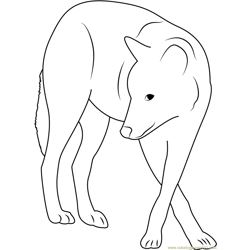 Grey Wolf Free Coloring Page for Kids