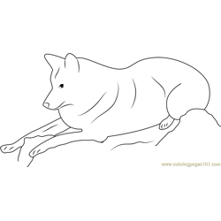 Himalayan Wolf Relaxing Free Coloring Page for Kids