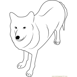 Himalayan Wolf Free Coloring Page for Kids