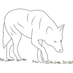Red Wolf Albany Chehaw Free Coloring Page for Kids