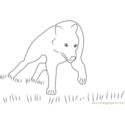 Wolf Running in Grass Free Coloring Page for Kids