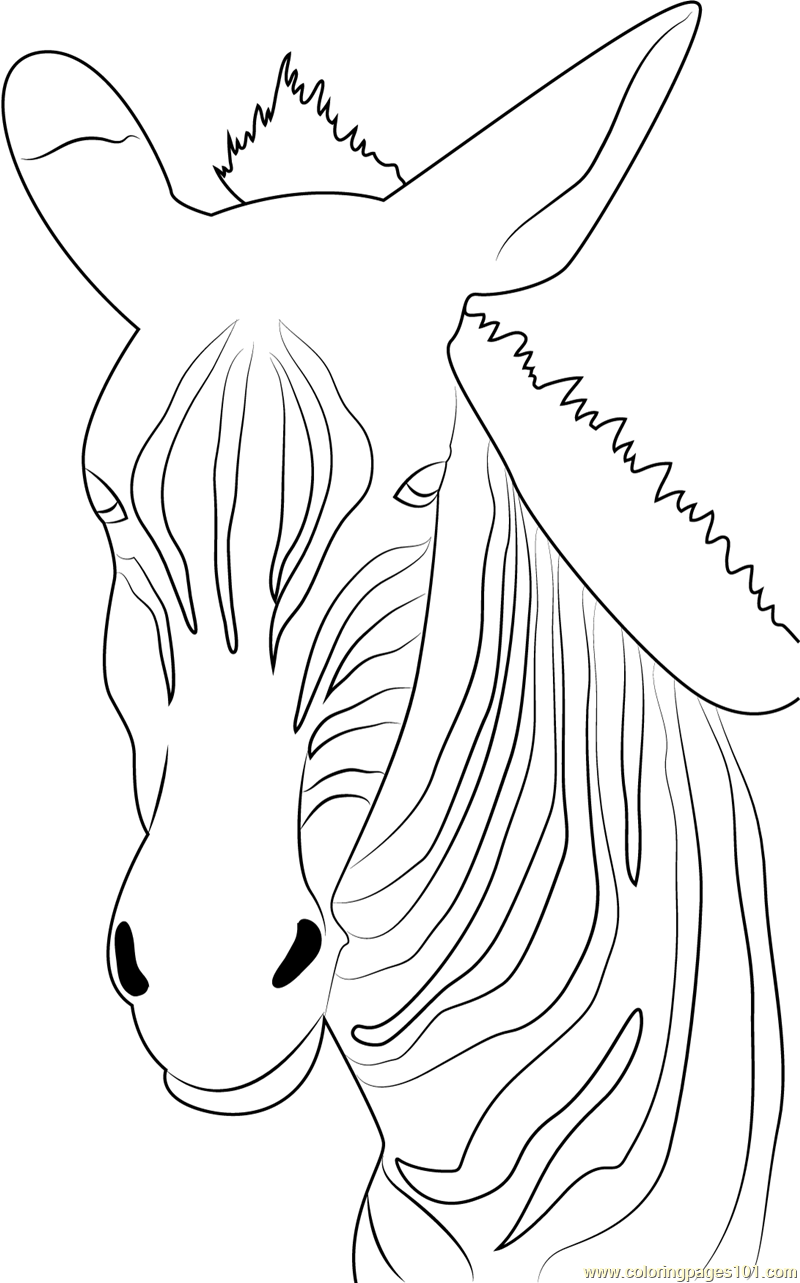 strutting zebra coloring page free zebra coloring pages