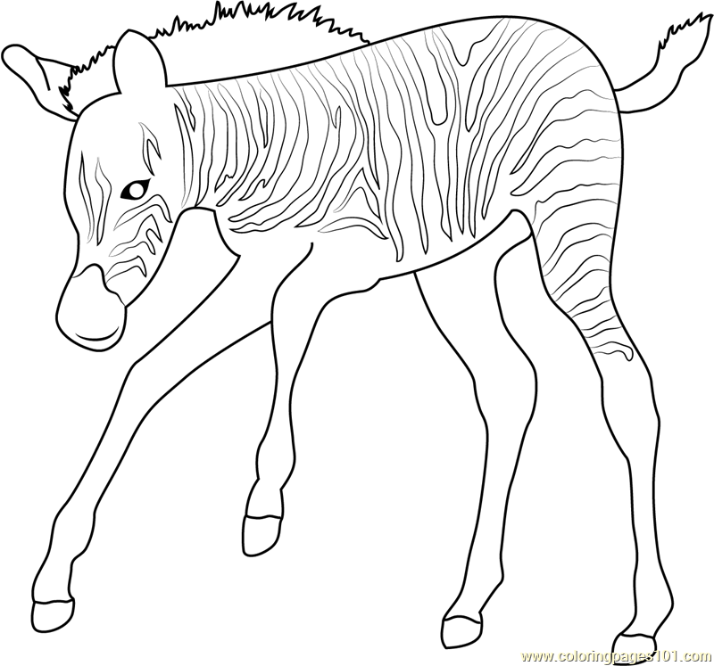 baby zebra coloring pages - photo#19