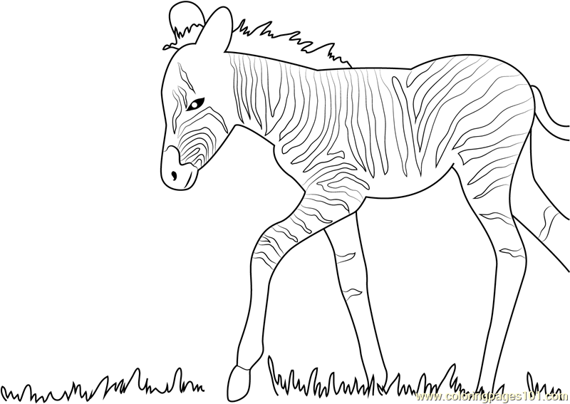 Cute Zebra coloring page | Free Printable Coloring Pages | 567x800