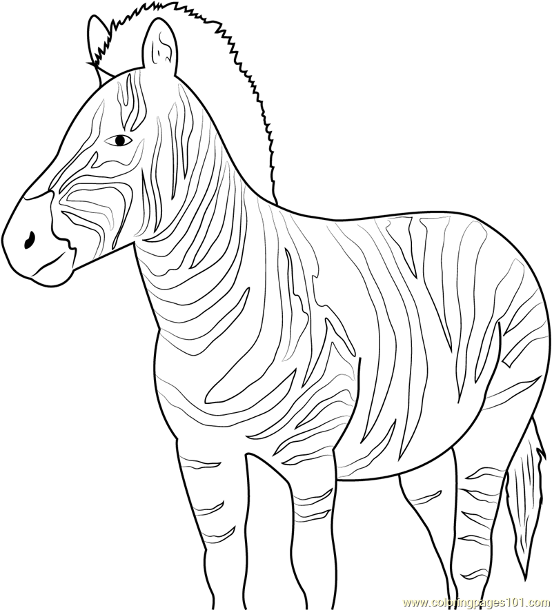 African Coloring Page Images in 2020   Animal coloring pages, Farm ...   885x800