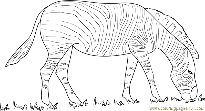 Zebra Black and White Coloring Page