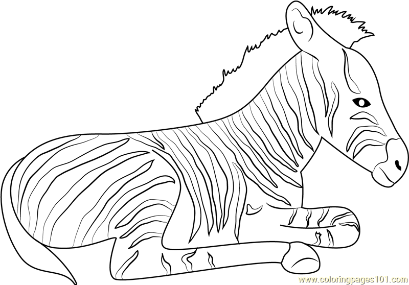 Zebra Relaxing Coloring Page Free Zebra Coloring Pages