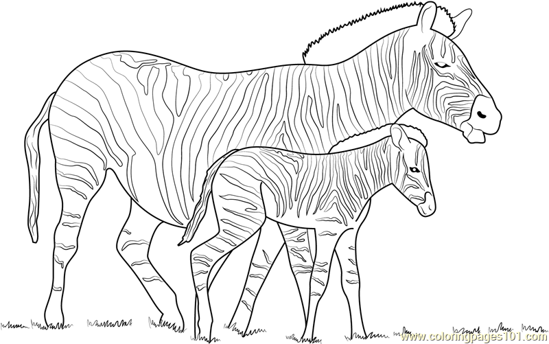 zebra coloring pages free - photo #41