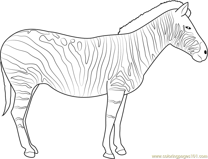 Zebra coloring page free zebra coloring pages for Zebra color page